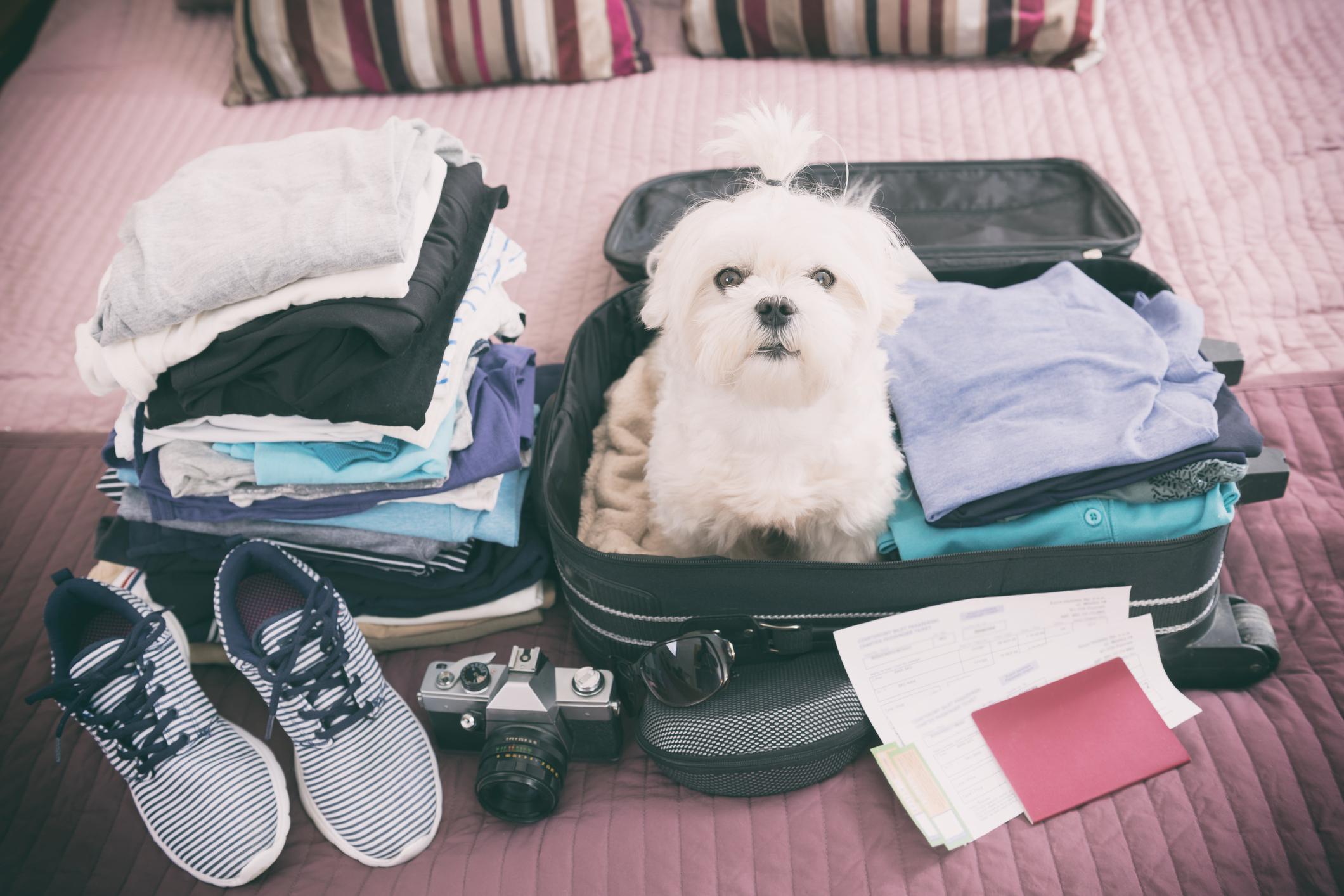 Ta med hunden på resan