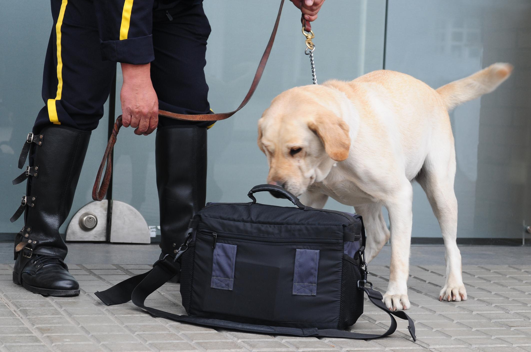 Alltid redo – samhällets arbetande hundar