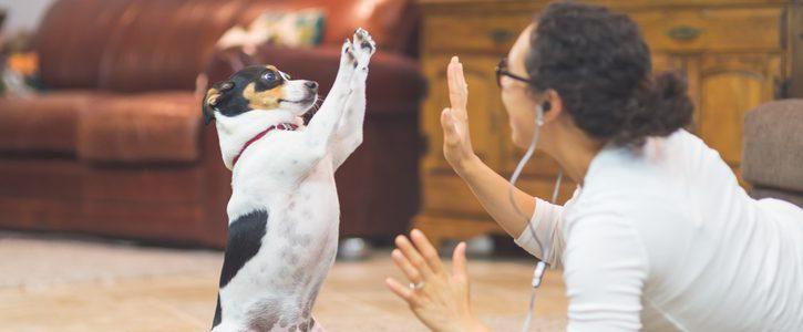 Hundens viktiga lekar