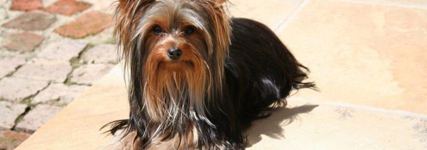 Små hundars behov av aktivering